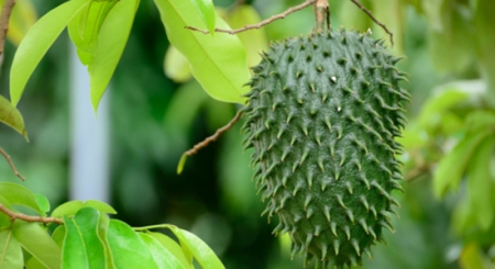 как заваривать зеленый чай для похудения инструкция